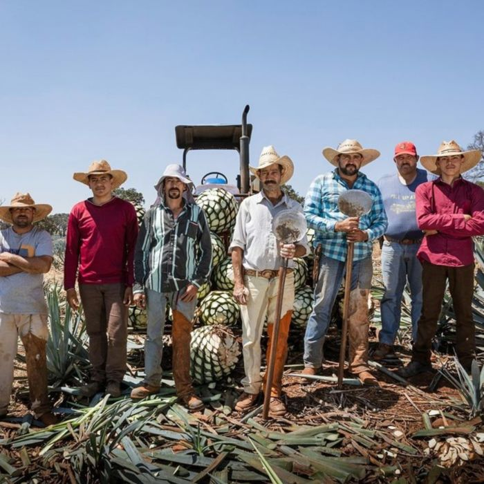 group of himadors in mexico agave field